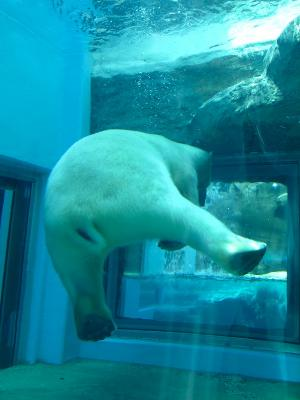 2013/7/18日本平動物園:ロッシーのおしり