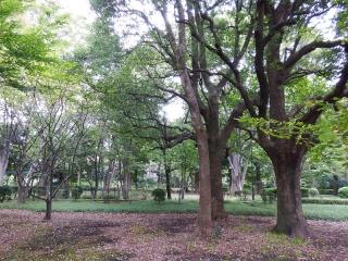 20131023_MMDドーム投影実験会:北の丸公園3