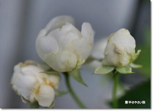 1-DSC07598.jpg