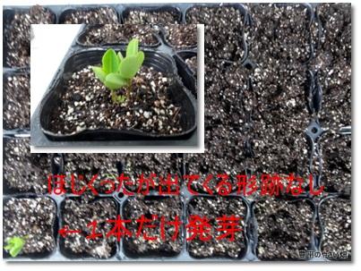 cats001_20130530165726.jpg