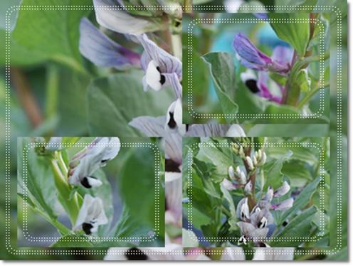cats007_20130330165346.jpg