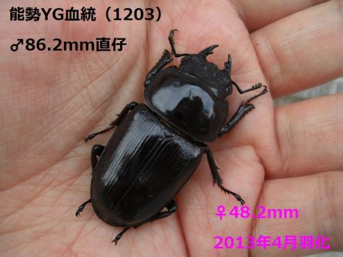 CIMG4021加工済み