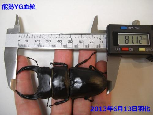 CIMG4646加工済み
