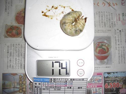 CIMG4679加工済み
