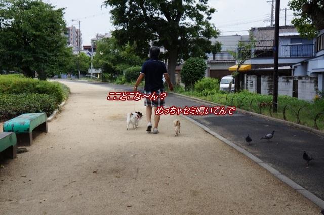 DSC07158_20130730190504651.jpg