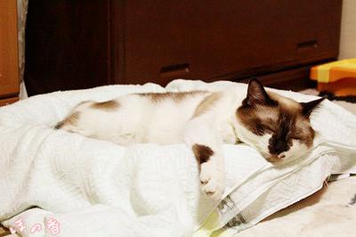 簡易夏用ベッド