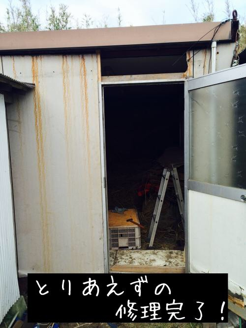20141011175130fec.jpg