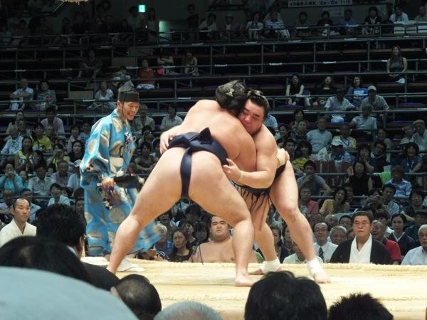 sumo8.jpg