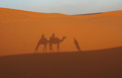 Sahara 18cm DSC03169