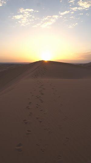 Sahara 11cmDSC03122