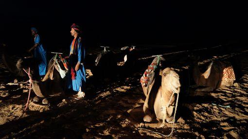 Sahara waiting 18cm DSC03001