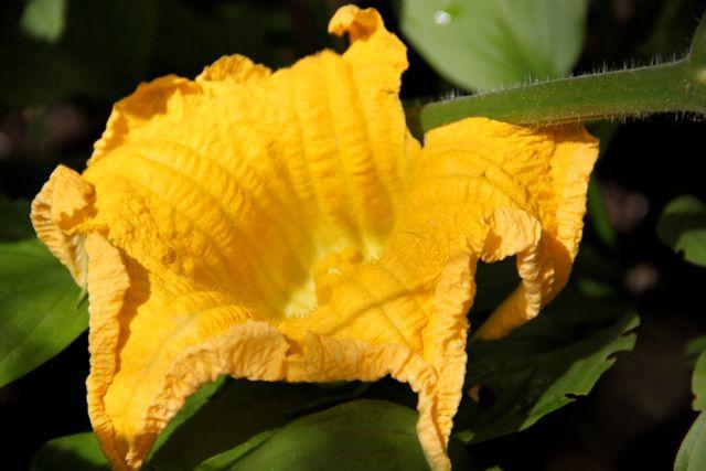 ウルトラの花