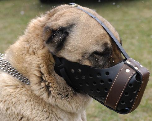 Dondi-leather-muzzle-UK.jpg