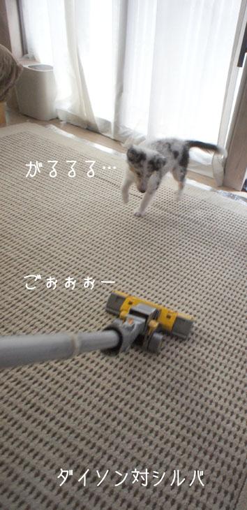 DSC02414_48508.jpg
