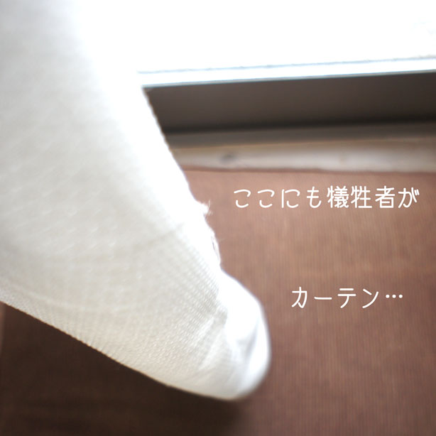 DSC02431_48525.jpg