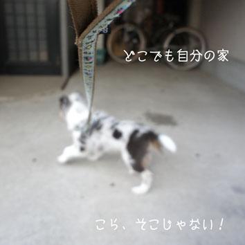 DSC03649_49812.jpg