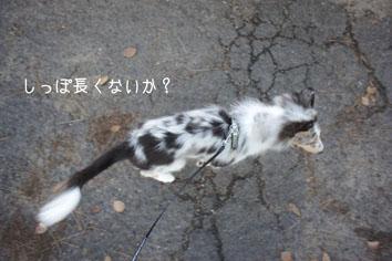 DSC05238_51398.jpg