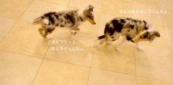 DSC05579_51737.jpg