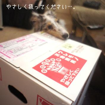 DSC07078_53300.jpg