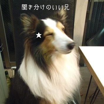 RIMG4671.jpg