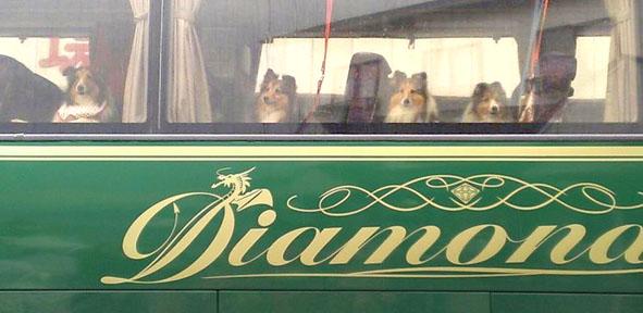diamondbus.jpg