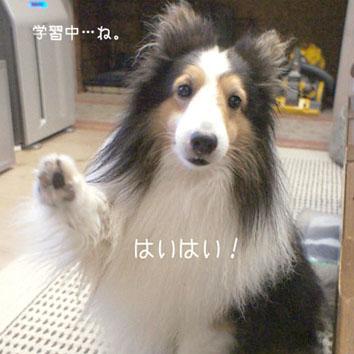 haihai-1_20130630200354.jpg