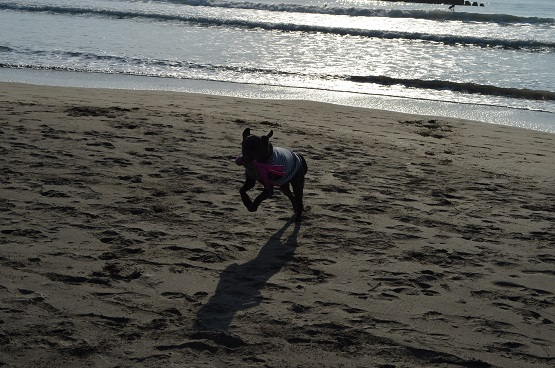 朝の海岸にて1