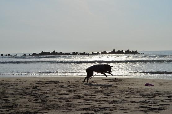 朝の海岸にて2