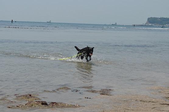 七里ヶ浜で遊ぶ4