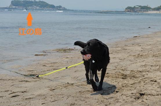 七里ヶ浜で遊ぶ5