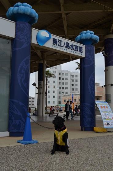 新江の島水族館前にて