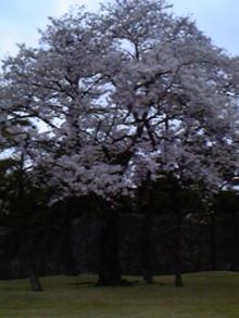 輝く!男塾・女塾-100402_175301.jpg