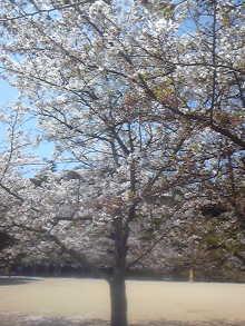 素敵な外見力&マナー術 輝く!男塾・女塾-110412_113535.jpg