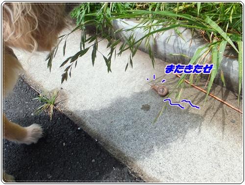 小雪とカタツムリ