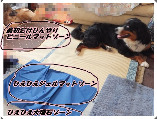 ひえひえゾーン2