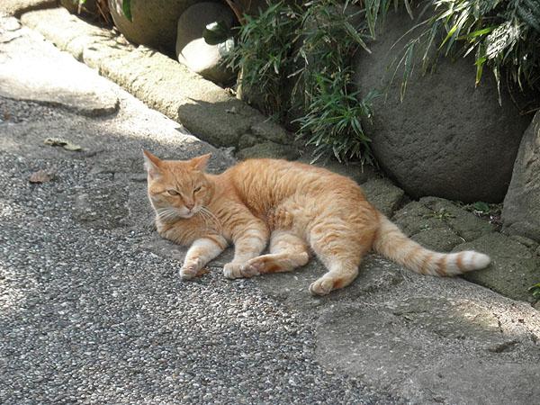 20130922仲見世通りの猫