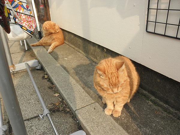 20130922帰り道の猫