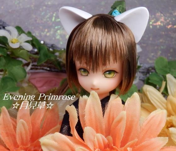 pomegranate-大地09
