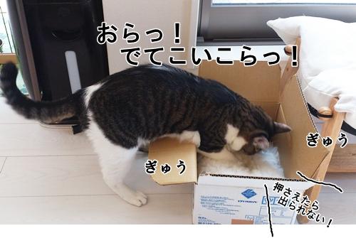 06DSC_0037.jpg