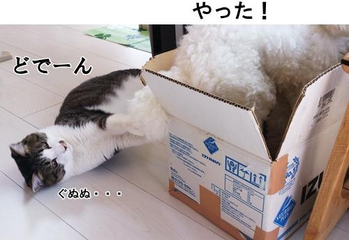 09DSC_0053.jpg