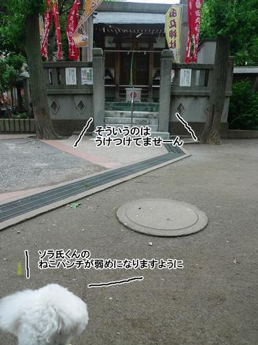 L1070946.jpg