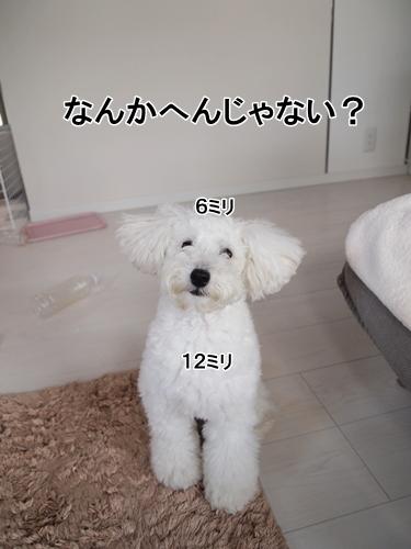 P6230338.jpg