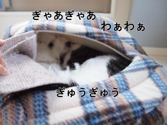 PA140701.jpg