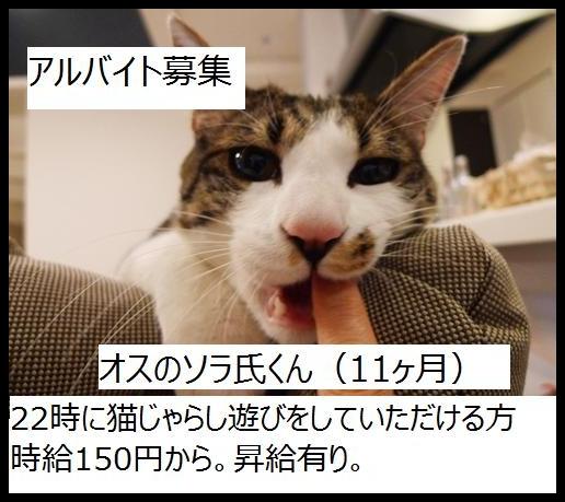 bosyuu_1.jpg