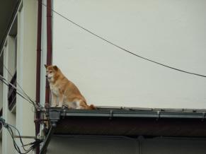 屋根の上のわんわん1 (2)