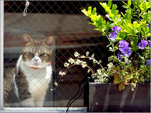 猫カフェ01