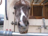 馬の出迎え
