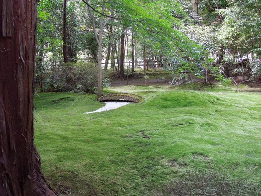 野々宮神社 苔庭園