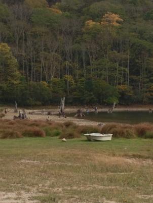 丸沼の枯れ木