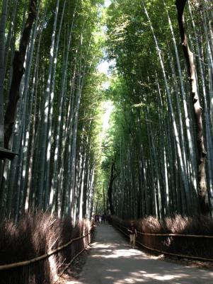 嵐山 竹林2